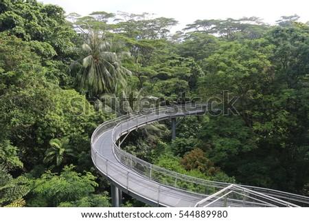 Tree Top Walk, Tropical Rainforest, Southern Ridges, Singapore #544889980