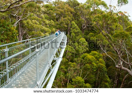 Tree Top Walk - Walpole - Australia #1033474774