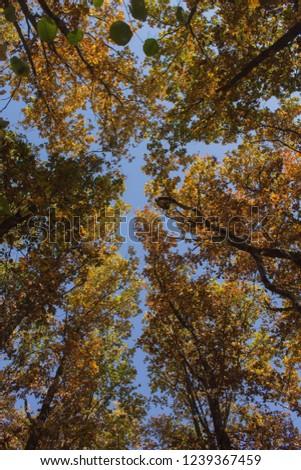 tree tops from below #1239367459