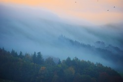 Tree tops on a mountain covered in mist