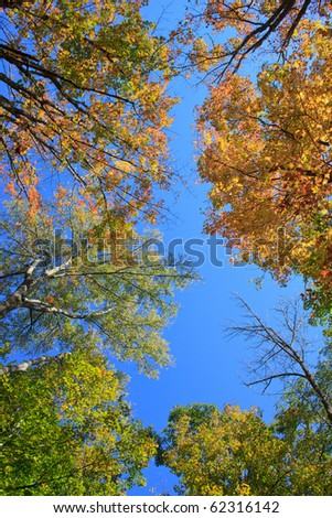 tree tops with fall foliage in the warm sunlight
