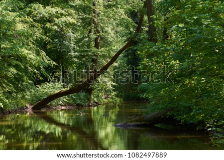 Tree tree in water, in a forest with reflection on the water surface of the river - Kyjovka, Mikulcice - South Moravia