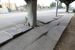 Tree Tree Roots Destroy The Sidewalk