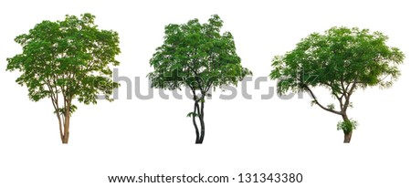 Tree tropical collection set  isolated on white with clipping path
