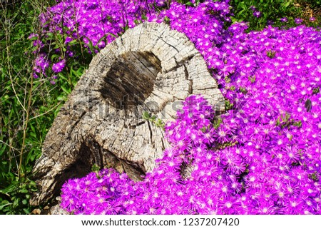 tree trunk and purple flowers #1237207420