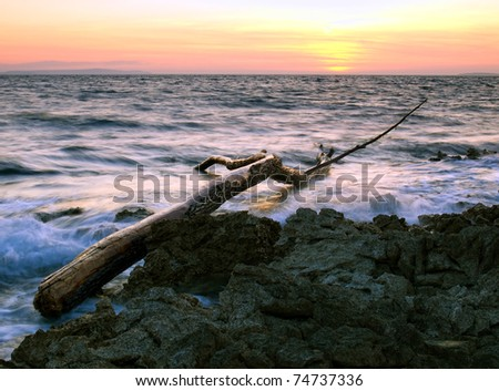 Tree trunk as debris on the rocky coast of the Adriatic Sea