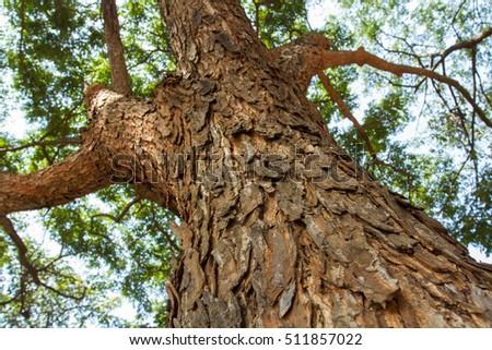 Tree trunk. bark texture #511857022