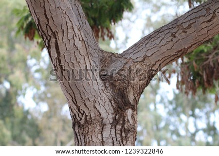 Tree trunk branching against green leaves background #1239322846