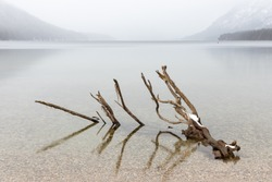 Tree Trunk in Still Lake in Winter with Fog and Snow