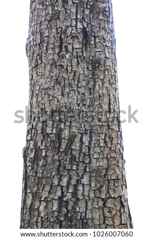 Tree trunk isolated on white background. #1026007060