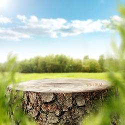Tree trunk top for your decoration and spring landscape