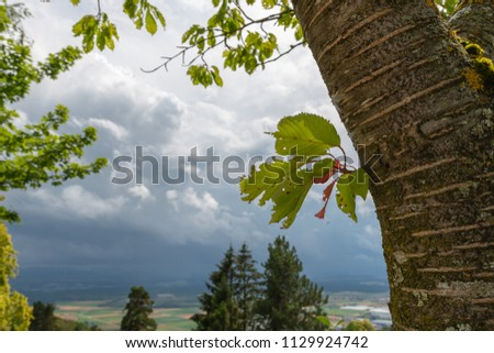 Tree trunk with green leaves and cloudy landscape in background #1129924742