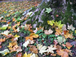 tree trunk with moss and colorful autumn leaves,