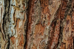 Tree trunk wood texture. aged pine tree with details. tree bark background and wallpaper. natural geology and biology backdrop