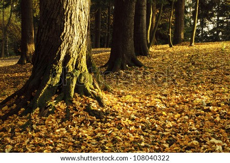 Tree trunks and autumn leaves
