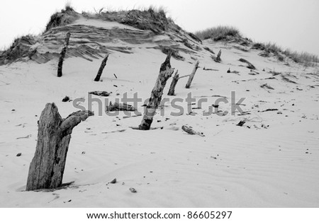 Tree trunks destroyed by sand #86605297