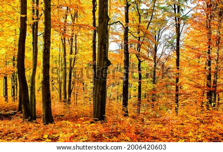 Tree trunks in the autumn forest. Autumn forest background. Golden autumn forest. Autumn in forest