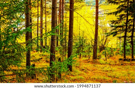 Tree trunks in the autumn forest. Autumn forest trees. Forest in autumn scene