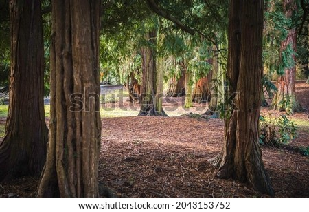 Tree trunks in the autumn park