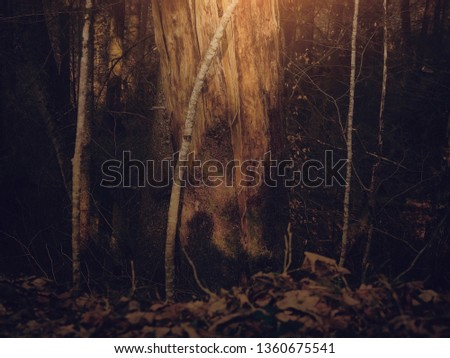 Tree trunks in the dawn #1360675541