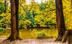 Tree trunks near a forest pond in autumn. Autumn forest pond trees. Trees at autumn forest pond