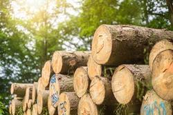 tree trunks wood - firewood - stock