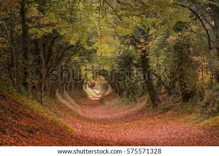Tree Tunnel Path