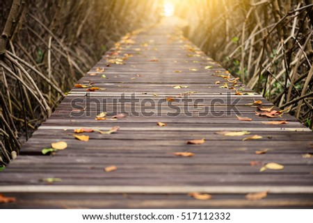 tree tunnel  wooden bridge in...