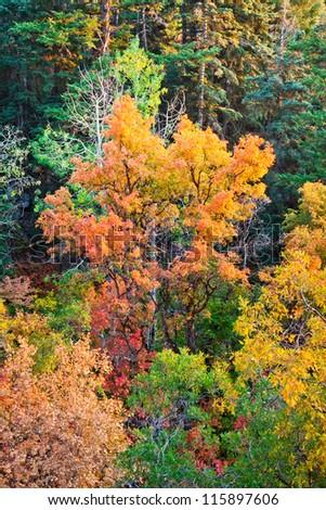 Tree Turning Orange in the Fall