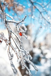 Tree twigs with red berries covered with sparkling snow and ice. Shiny icicles on a tree, blue sky on the background. Cold snowy frosty weather in Winter forest. Natural background with copy space.