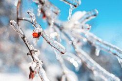 Tree twigs with red berries covered with sparkling snow and ice. Shiny icicles on a tree, blue sky on the background. Cold frosty snowy weather in Winter forest. Natural background with copy space.