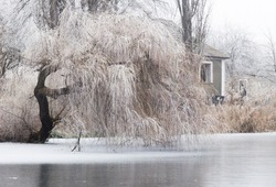 tree weeping willow winter landscape