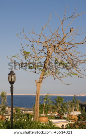 tree with a bird