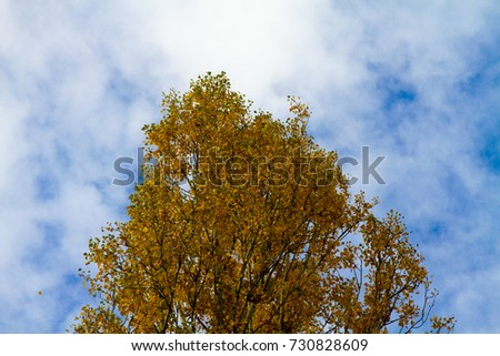 Tree with autumn leaves toned with blue sky in the background