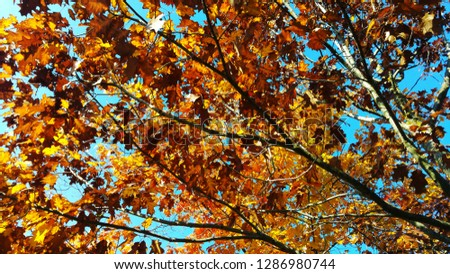 Tree with autumnal colors #1286980744