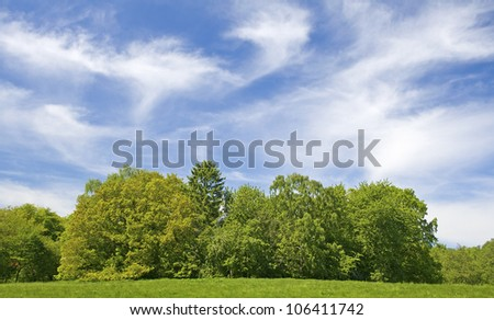 Tree, with blue sky. Green field. #106411742