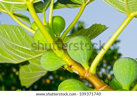 tree with fruit