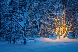 Tree with garland warm lights in night snowy winter forest, winter fairytale