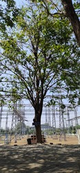 Tree with Grean Leafs Between Power Plants