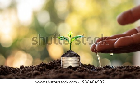 Tree with green leaves growing from coin and natural green background blurred finance and money management concept for SME. Foto stock ©