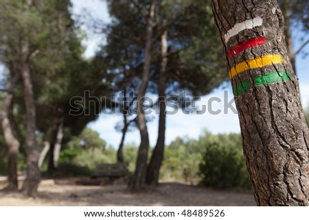 tree with hiking trail signs (Provence, France)