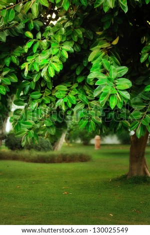 tree with large green leaves on the green grass