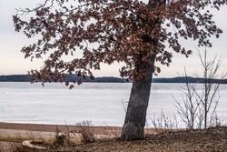 Tree with leaves in winter overlooking Big Marine Lake at Big Marine Park Reserve, Marine on St. Croix, Minnesota USA.