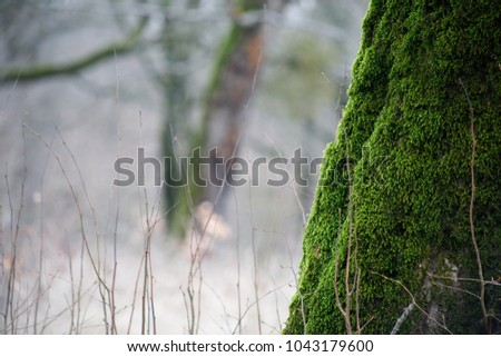 tree with moss on roots in a green forest or moss on tree trunk. Tree bark with green moss. Azerbaijan nature. Selective focus.