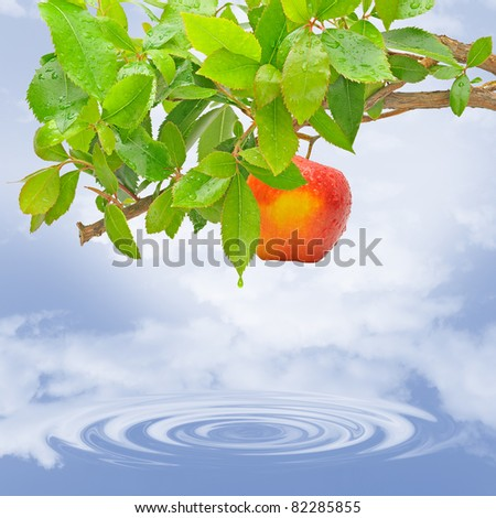 Tree with red apple on the lake.