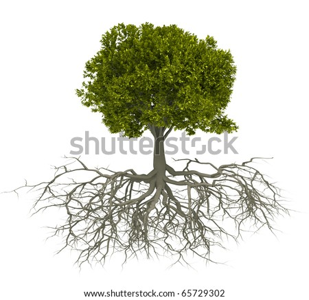 Tree with root isolated over white - this is a 3d render illustration