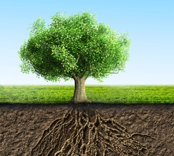 tree with roots and soil