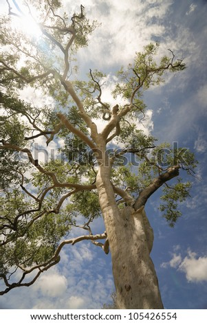 Tree with sky in the background,Outback, Australia