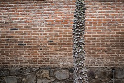 Tree with spikes on tree trunk against a brick wall texture