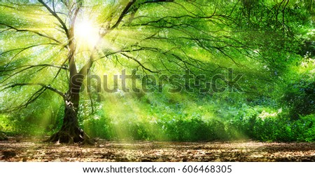 Tree With Sunshine In Wild Forest  #606468305